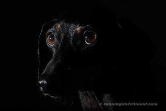 BlackArtPhoto4
